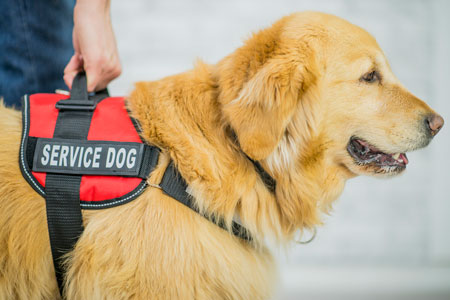 Am I Ready for a Service Dog?