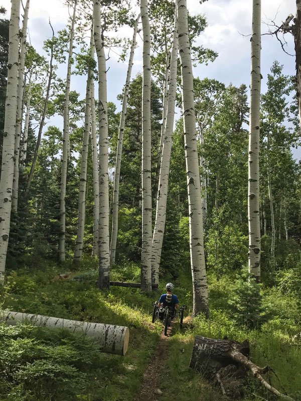 A handcyclist cycles through an aspen grove near the Grand Canyon