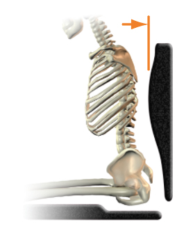 Posterior thoracic support (shape) - too much